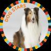 Dog Stars!