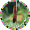 Woolly Awesome
