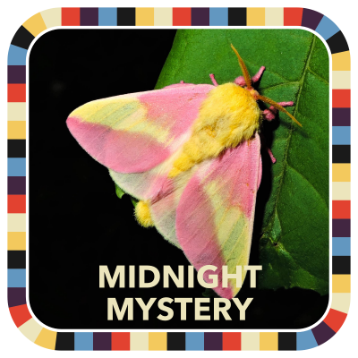 Midnight Mystery badge image