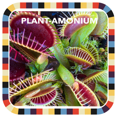 Plant-Amonium!