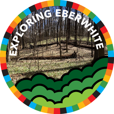 Exploring Eberwhite