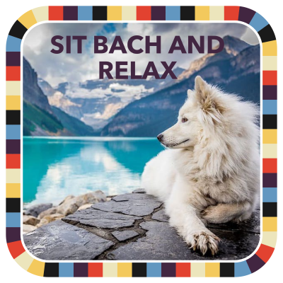 Sit Bach and Relax