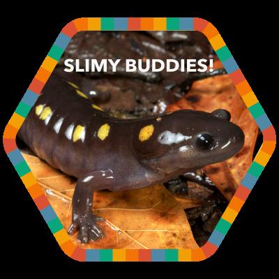 Slimy Buddies!
