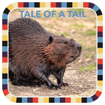 Tale of a Tail badge image