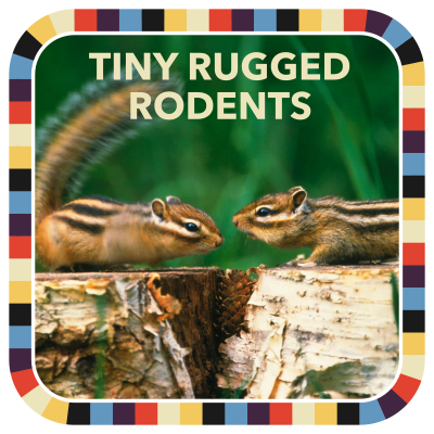TINY RUGGED RODENTS