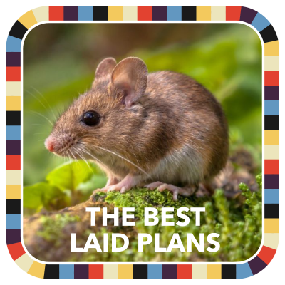 The Best Laid Plans badge image