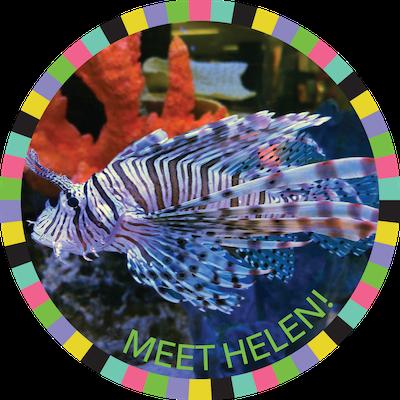 Meet Helen