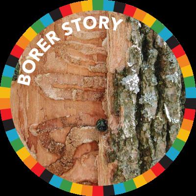 Borer Story
