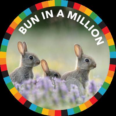 Bun In A Million