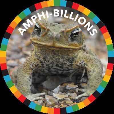 Amphi-billions