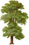 Ann Arbor Area Earth Day Tree