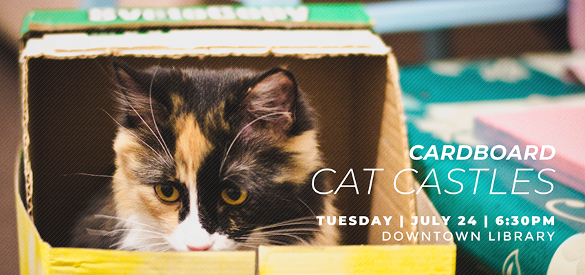 Cat Castles - Tuesday July 24. .