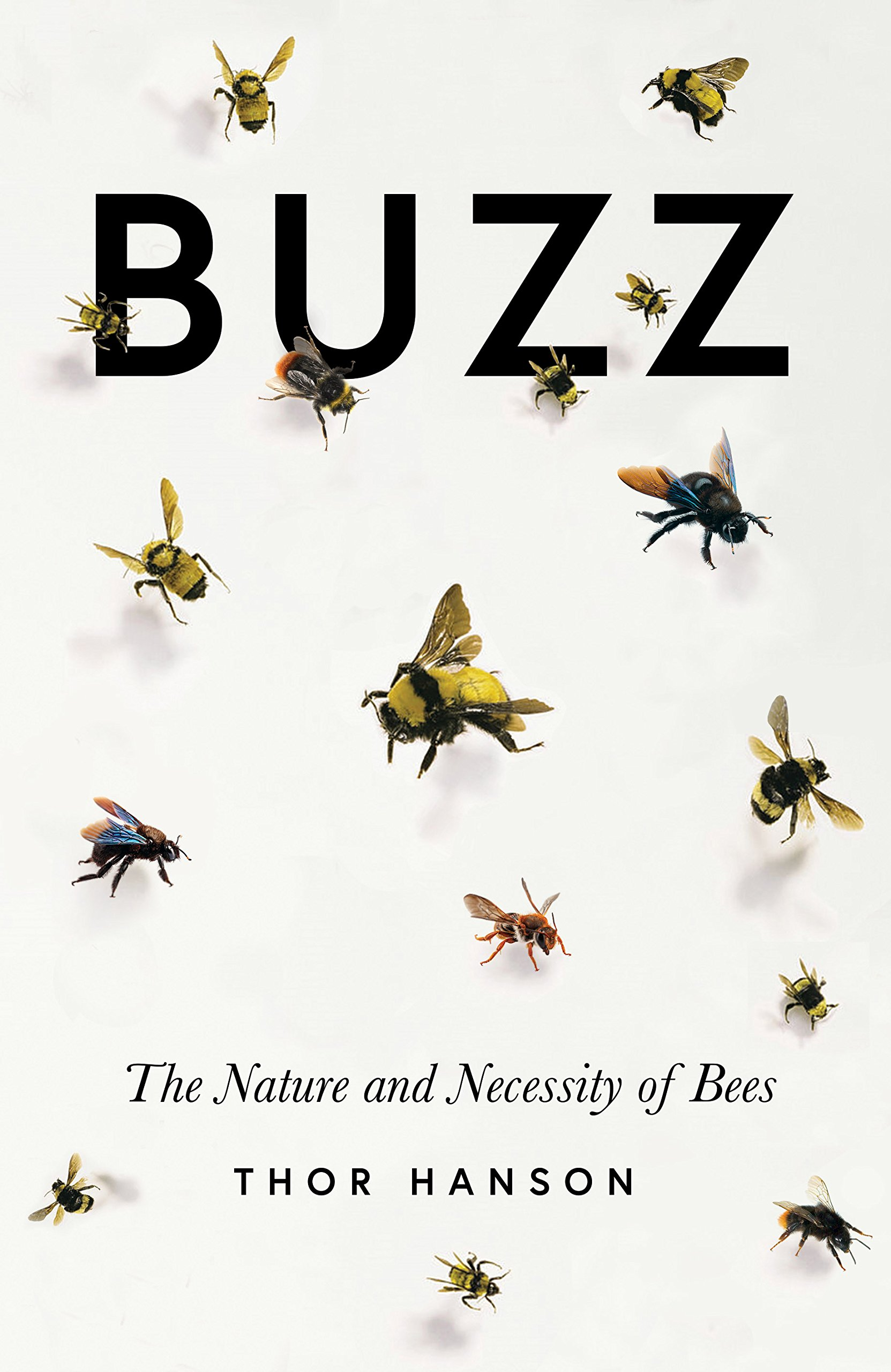 Promotional image for Martin Bandyke Under Covers for January 2019: Martin interviews Thor Hanson, author of Buzz: The Nature and Necessity of Bees. podcast