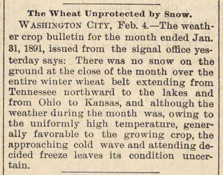 The Wheat Unprotected By Snow image