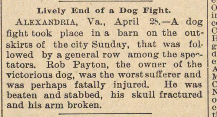 Lively End Of A Dog Fight image