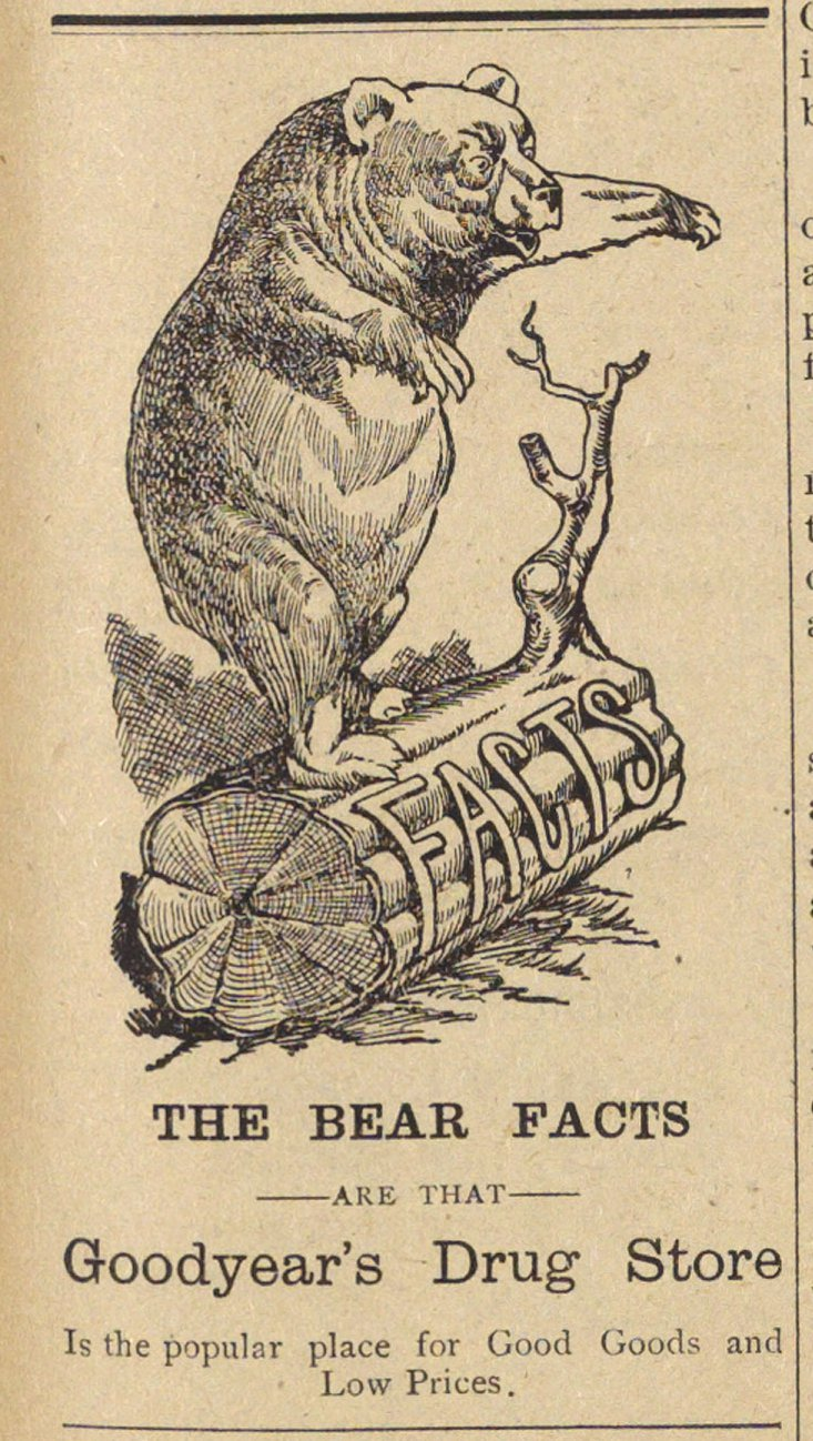 The Bear Facts image