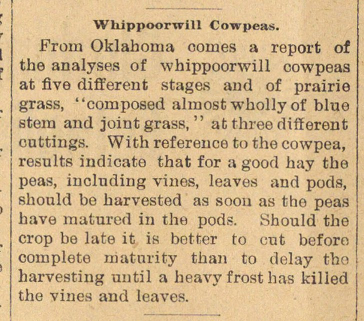 Whippoorwill Cowpeas image