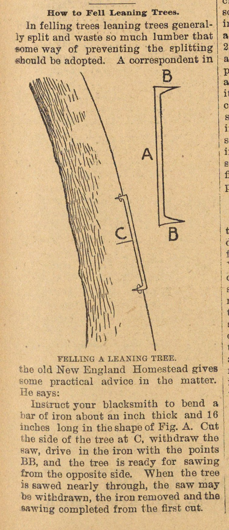 How To Fell Leaning Trees image
