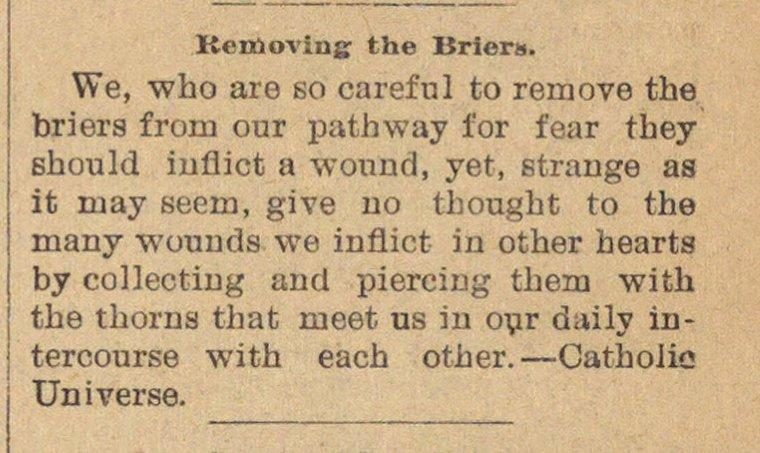 Removing The Briers image
