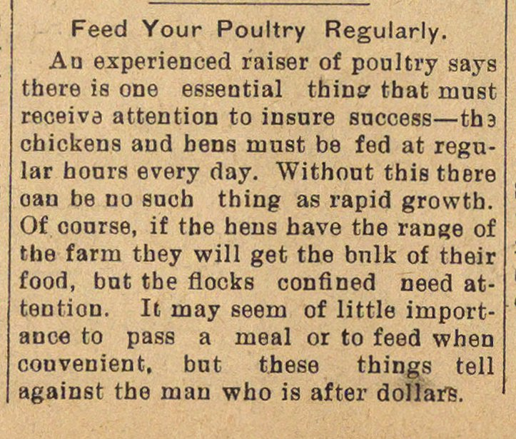 Feed Your Poultry Regularly image