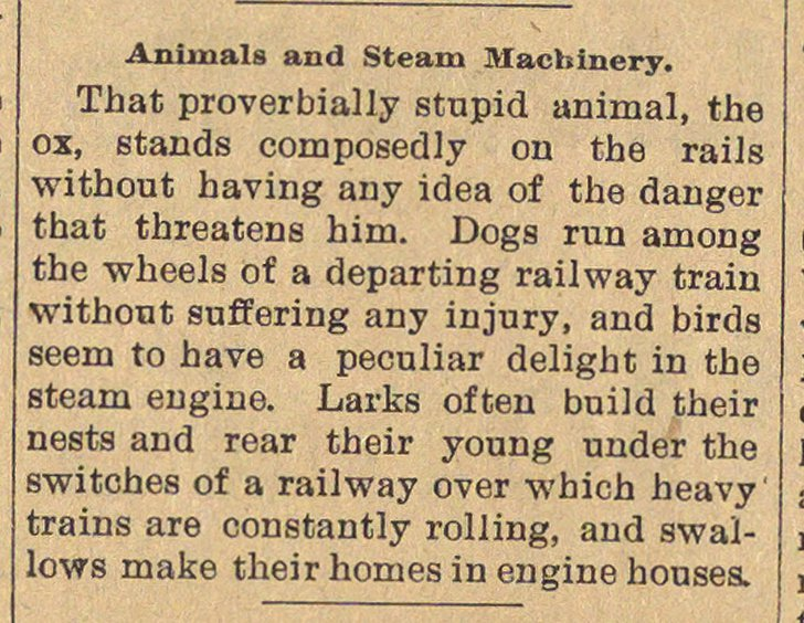 Animals And Steam Machinery image