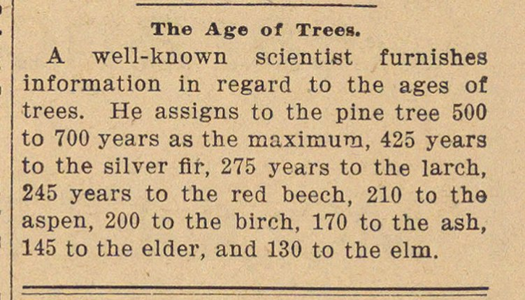 The Age Of Trees image