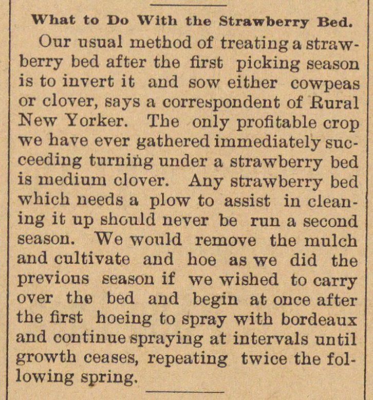 What To Do With The Strawberry Bed image