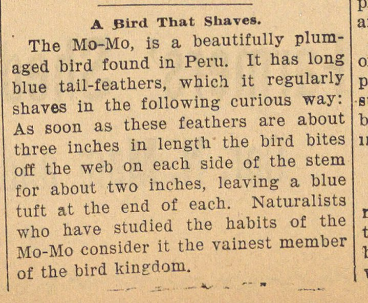 A Bird That Shaves image
