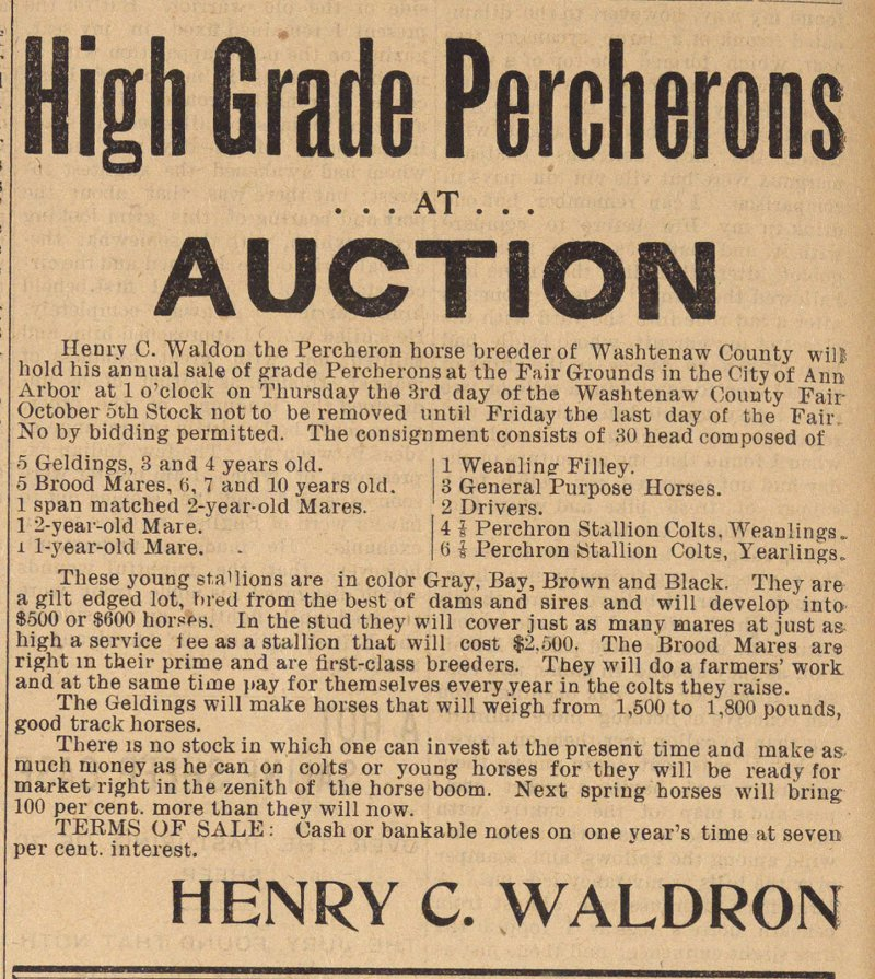High Grade Percherons image