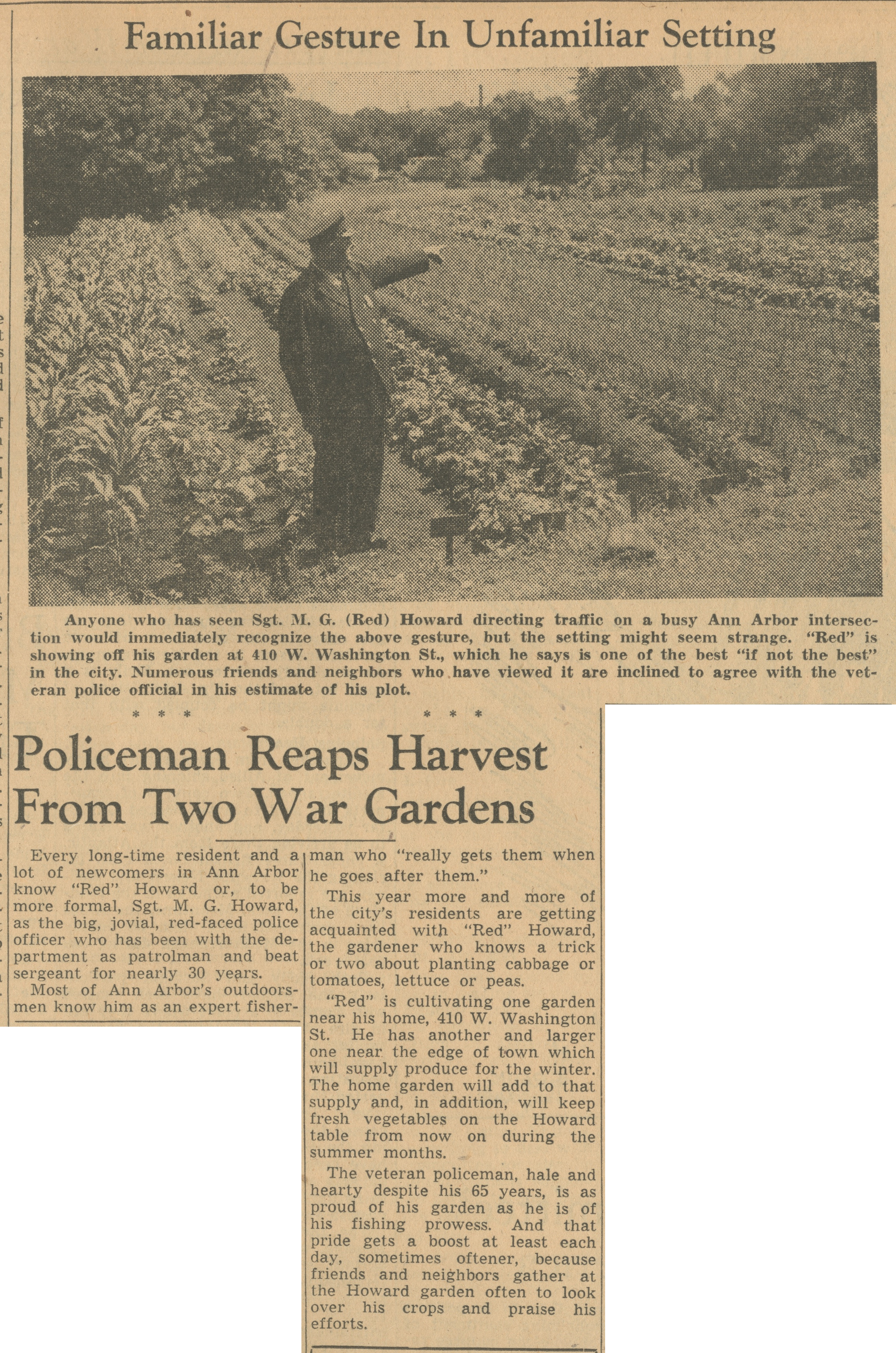 Familiar Gesture In Unfamiliar Setting - Policeman Reaps Harvest From Two War Gardens image