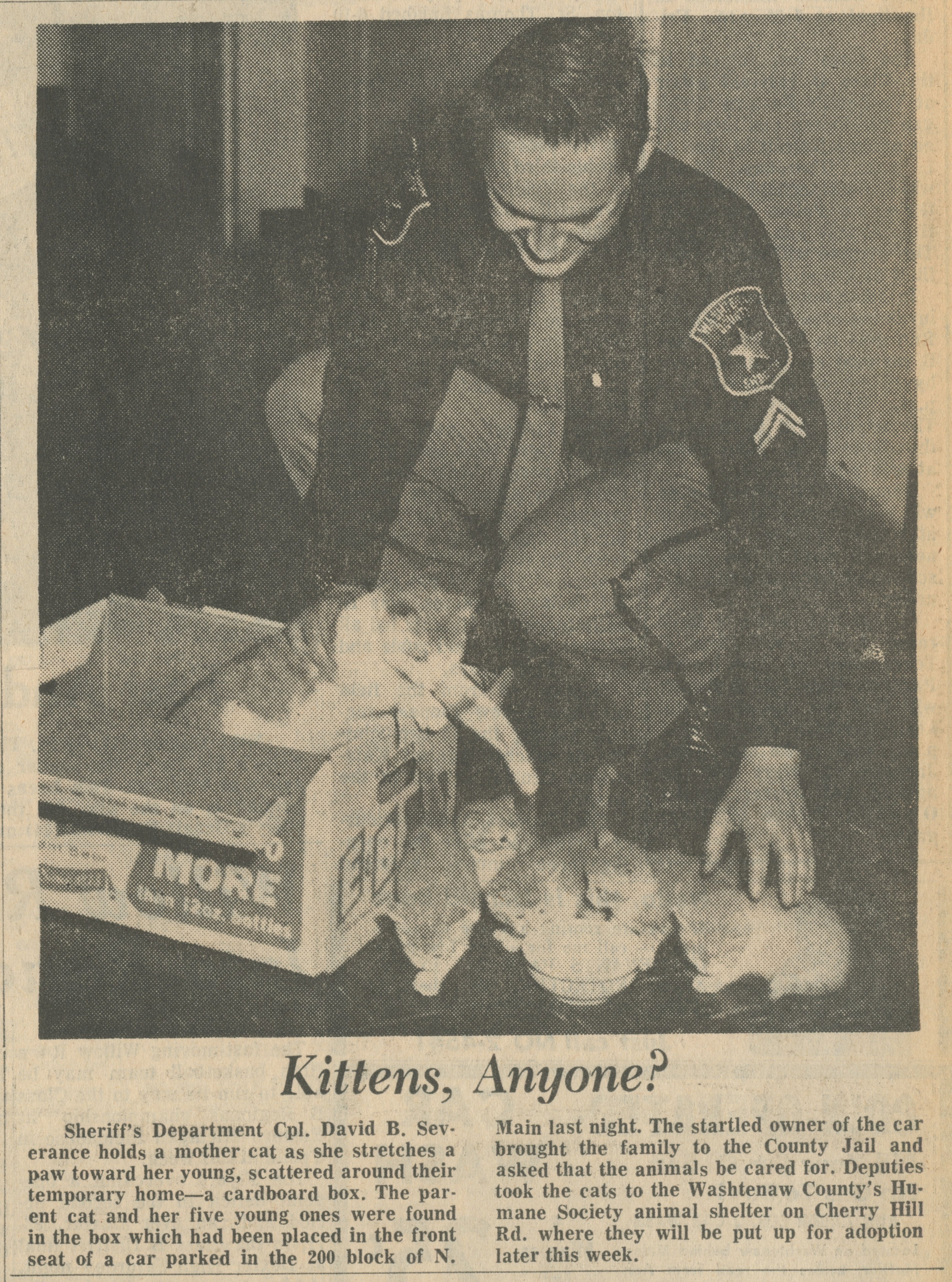 Kittens, Anyone? image