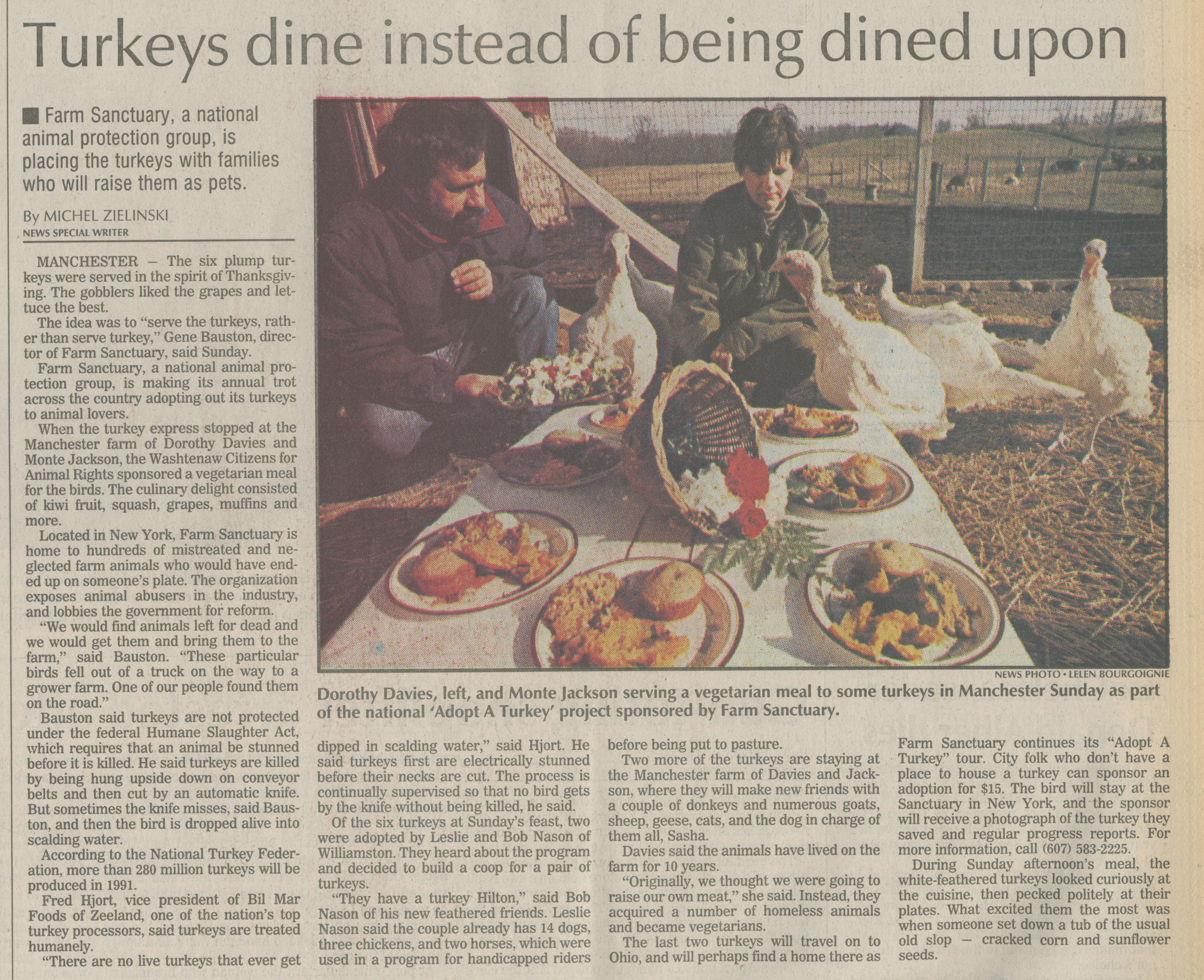 Turkeys dine instead of being dined upon image