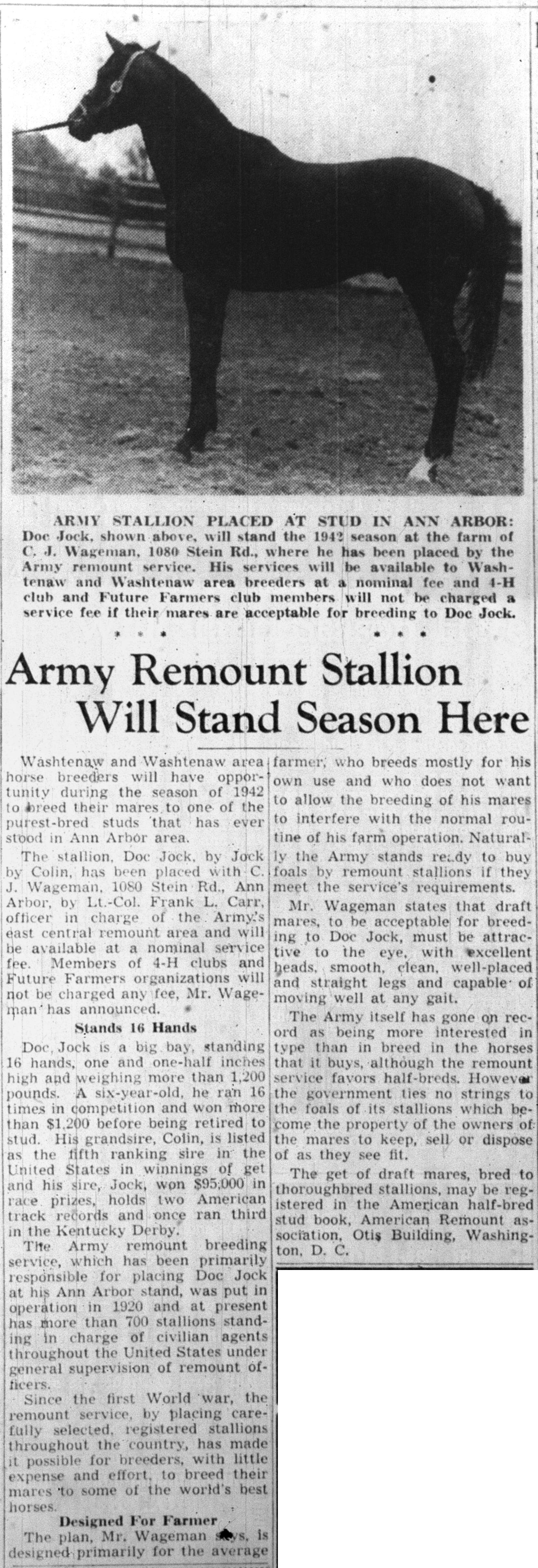 Army Remount Stallion Will Stand Season Here image