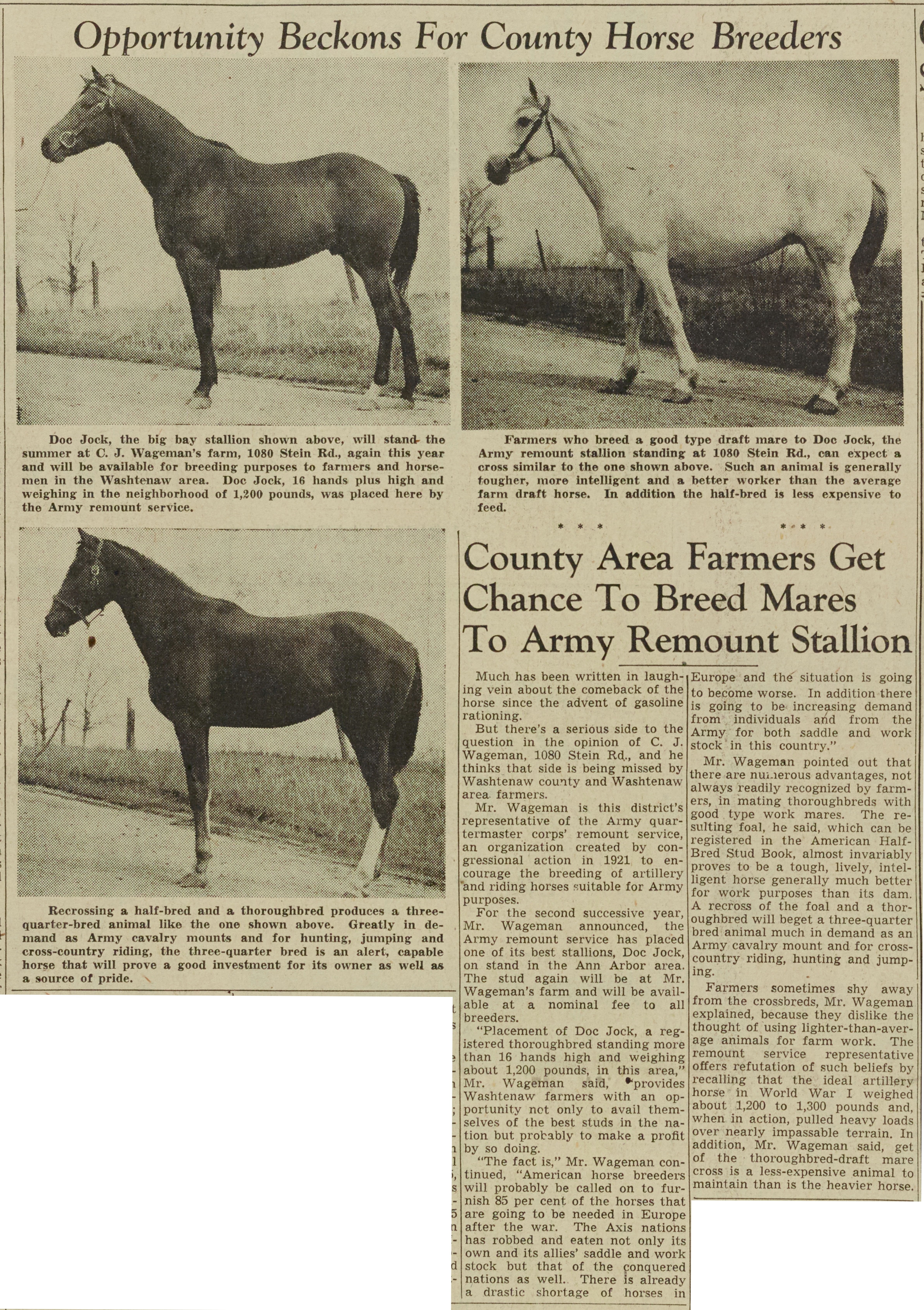 County Area Farmers Get Chance To Breed Mares To Army Remount Stallion image