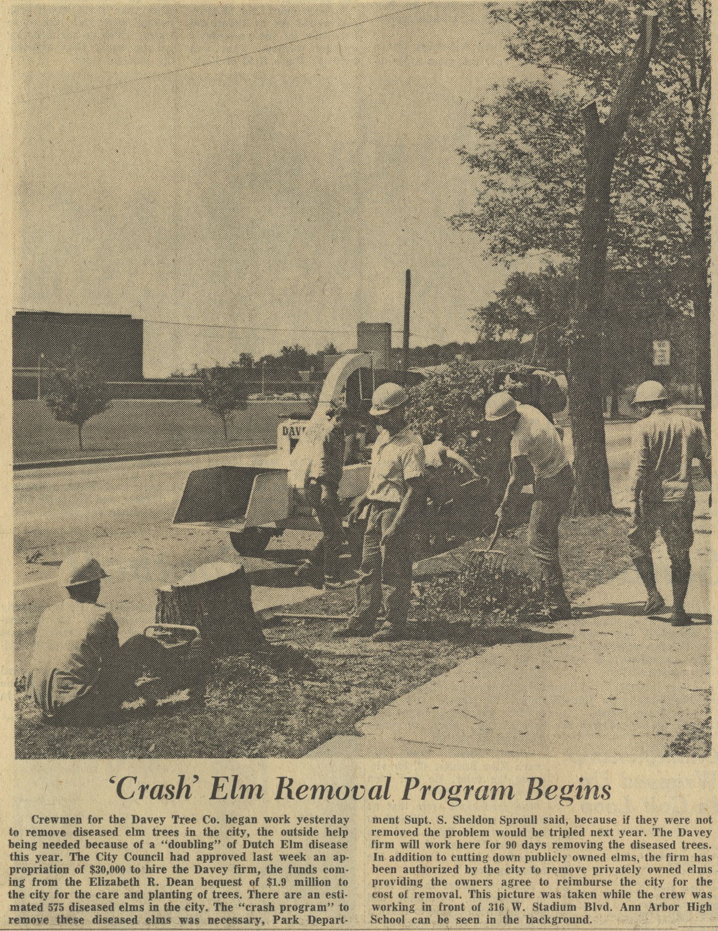 'Crash' Elm Removal Program Begins image