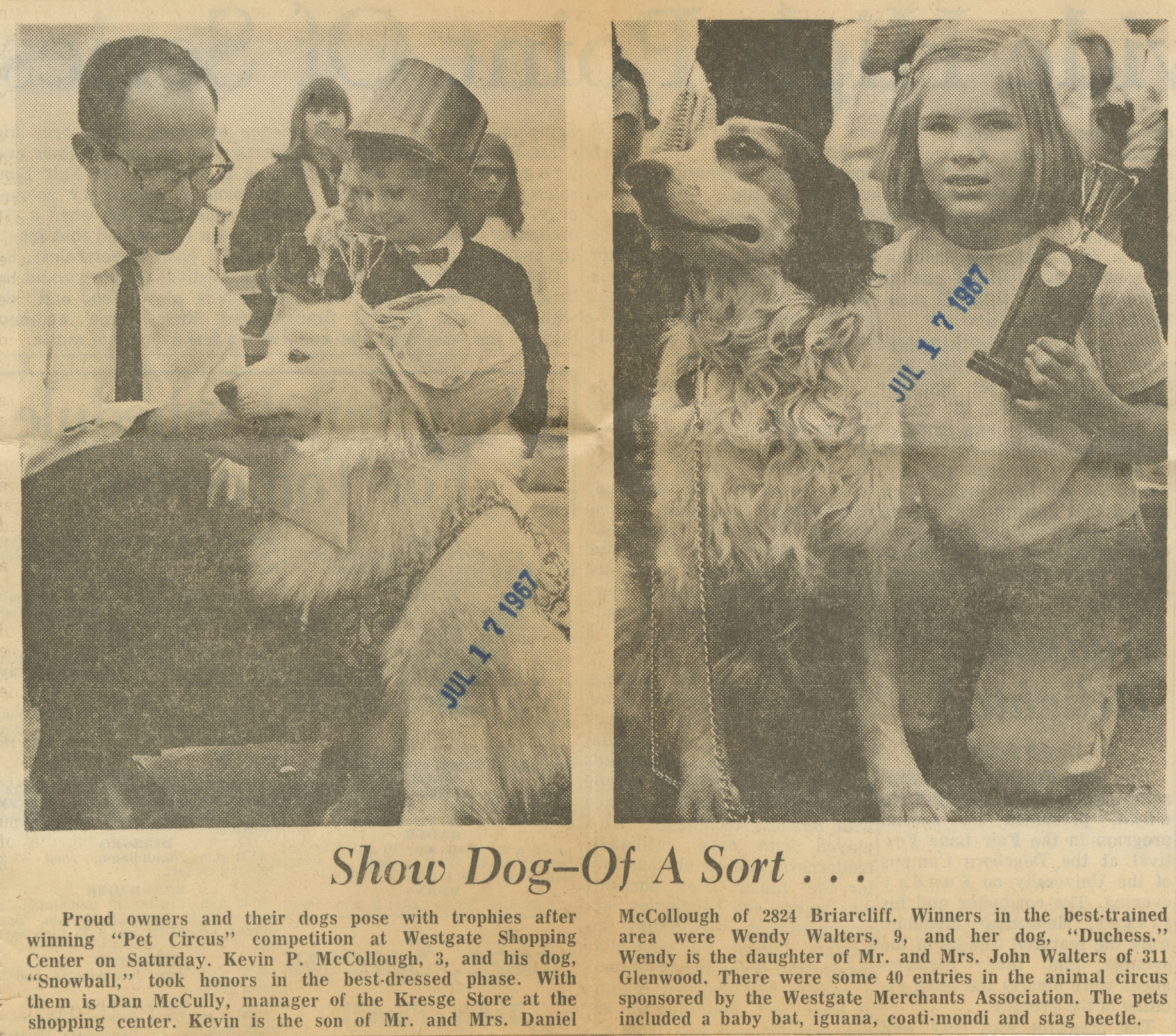 Show Dog-Of A Sort... image