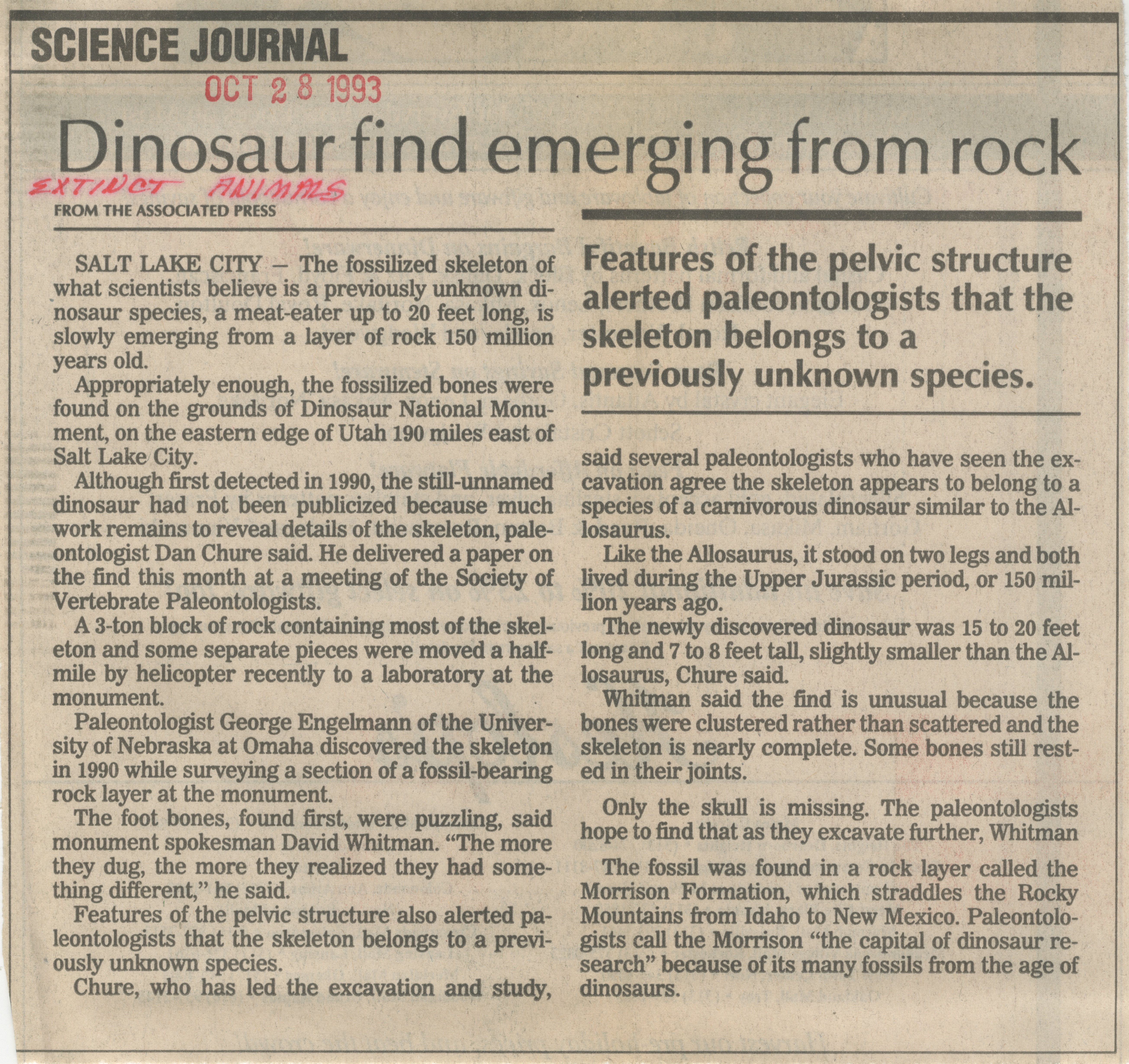 Dinosaur Find Emerging From Rock image