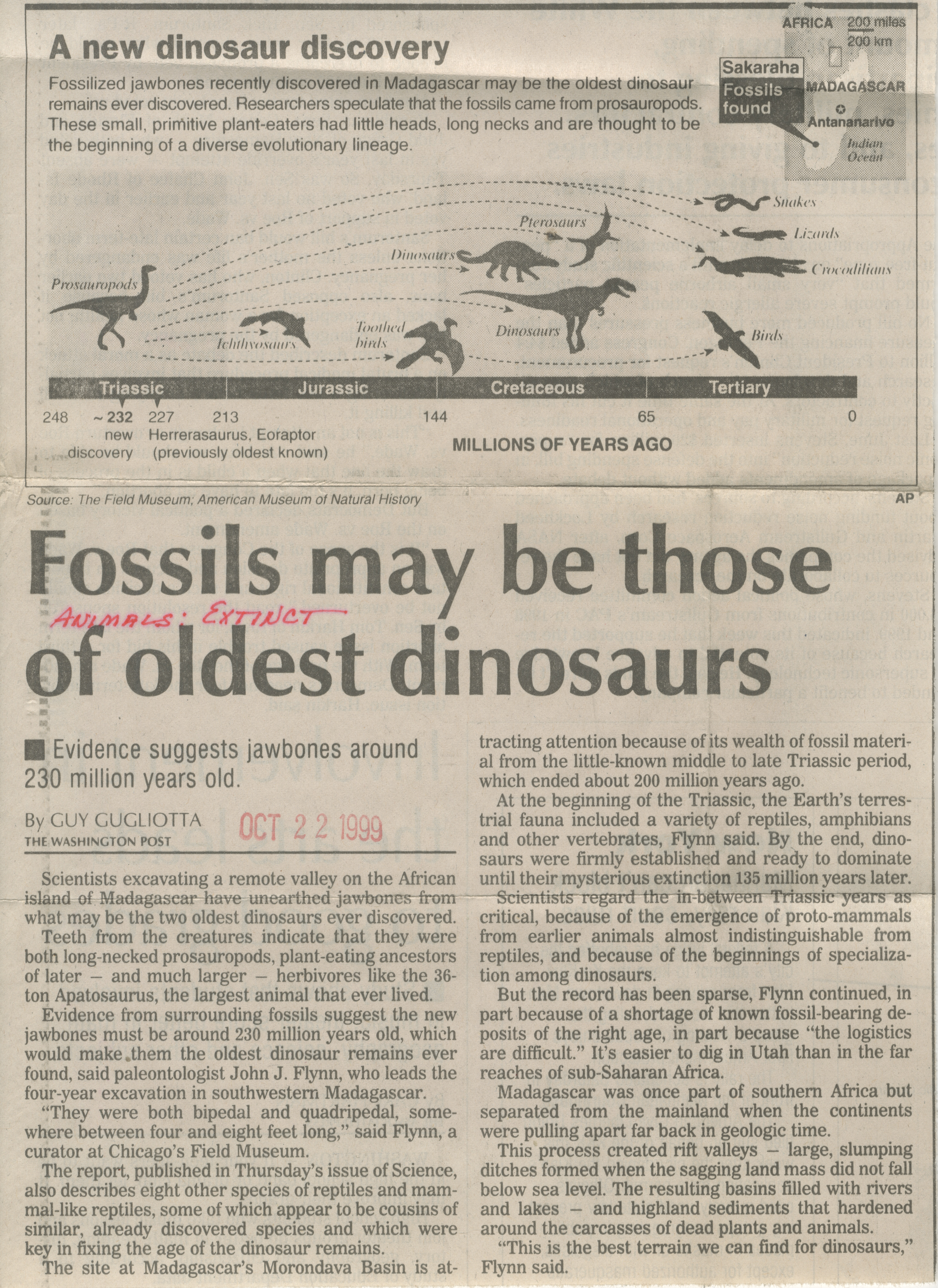 Fossils May Be Those Of Oldest Dinosaurs image