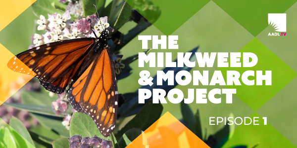 The Milkweed and Monarch Project