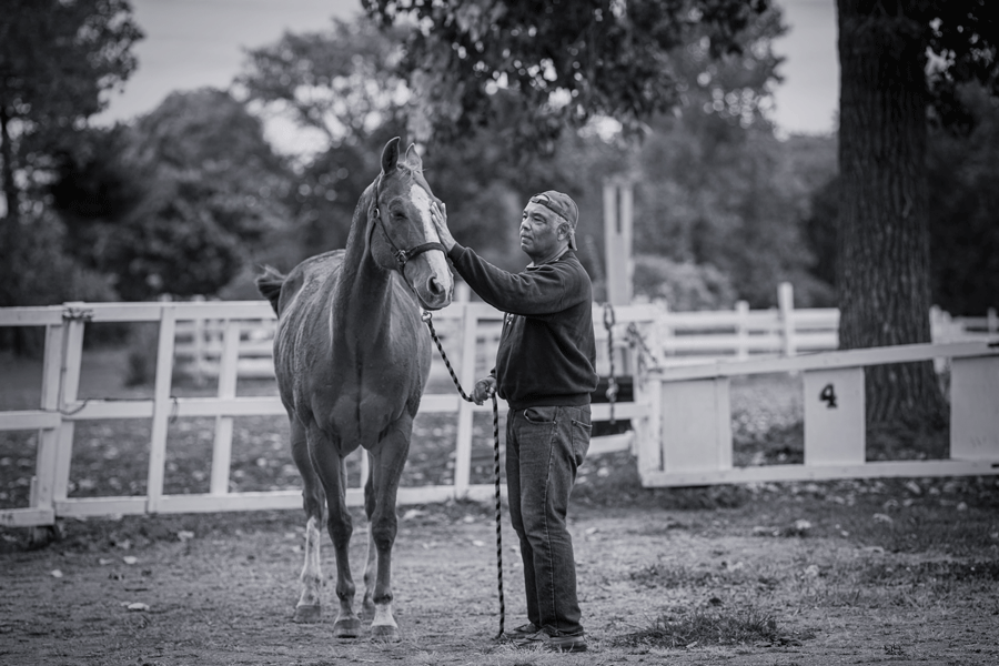 A man stands with a horse in the paddock, with his left hand on it's muzzle.