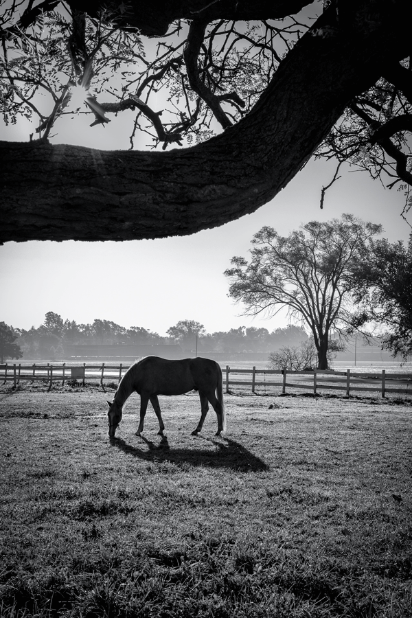 A lone horse grazes in the pasture, backlit by the sun.
