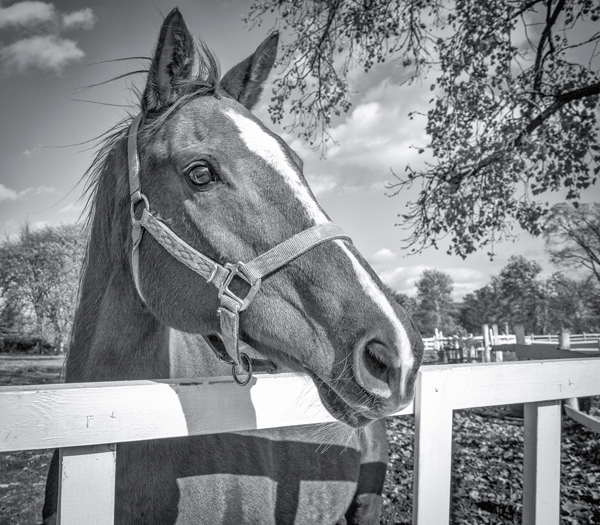 A horse looks over the fence toward the distance.