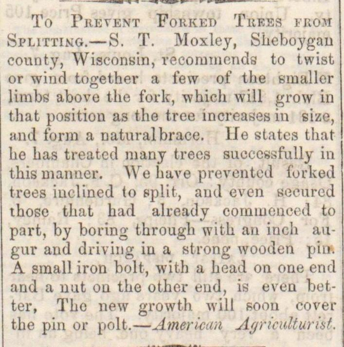 To Prevent Forked Trees From Splitting image