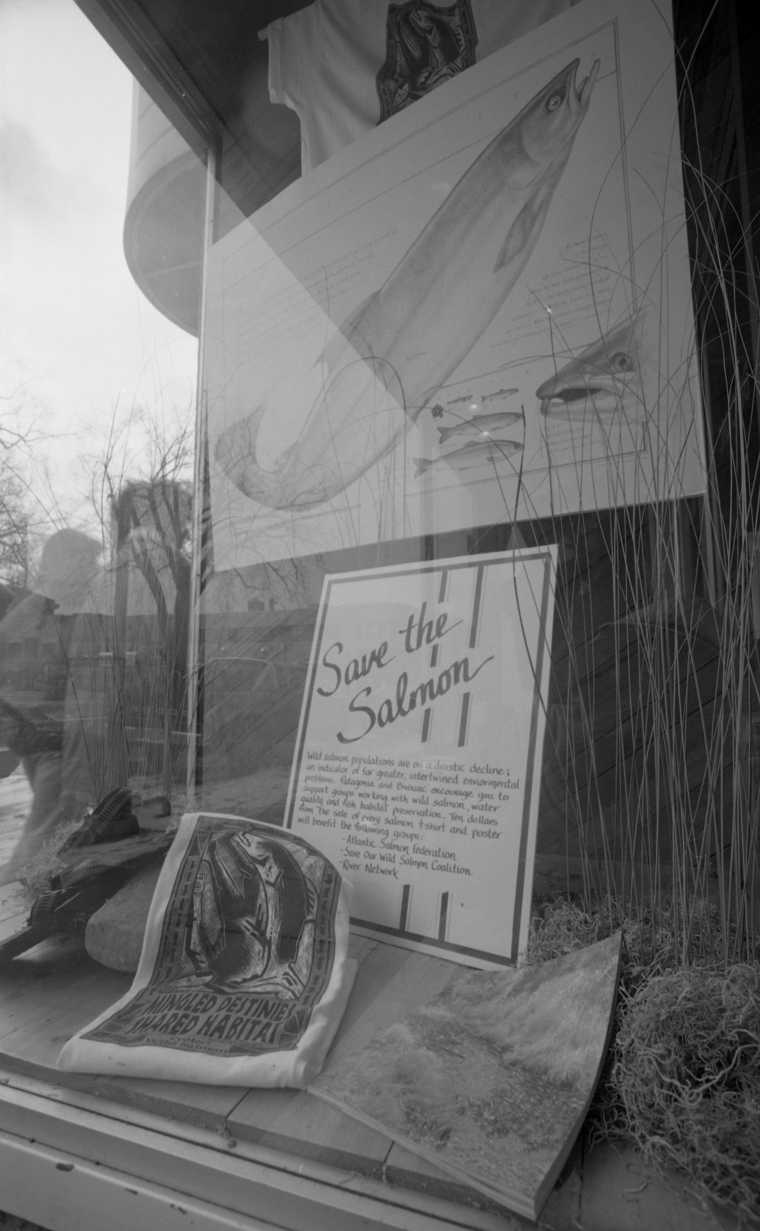 Bivouac's Window Display in Nickels Arcade Promotes Environmental Causes, July 1984 image