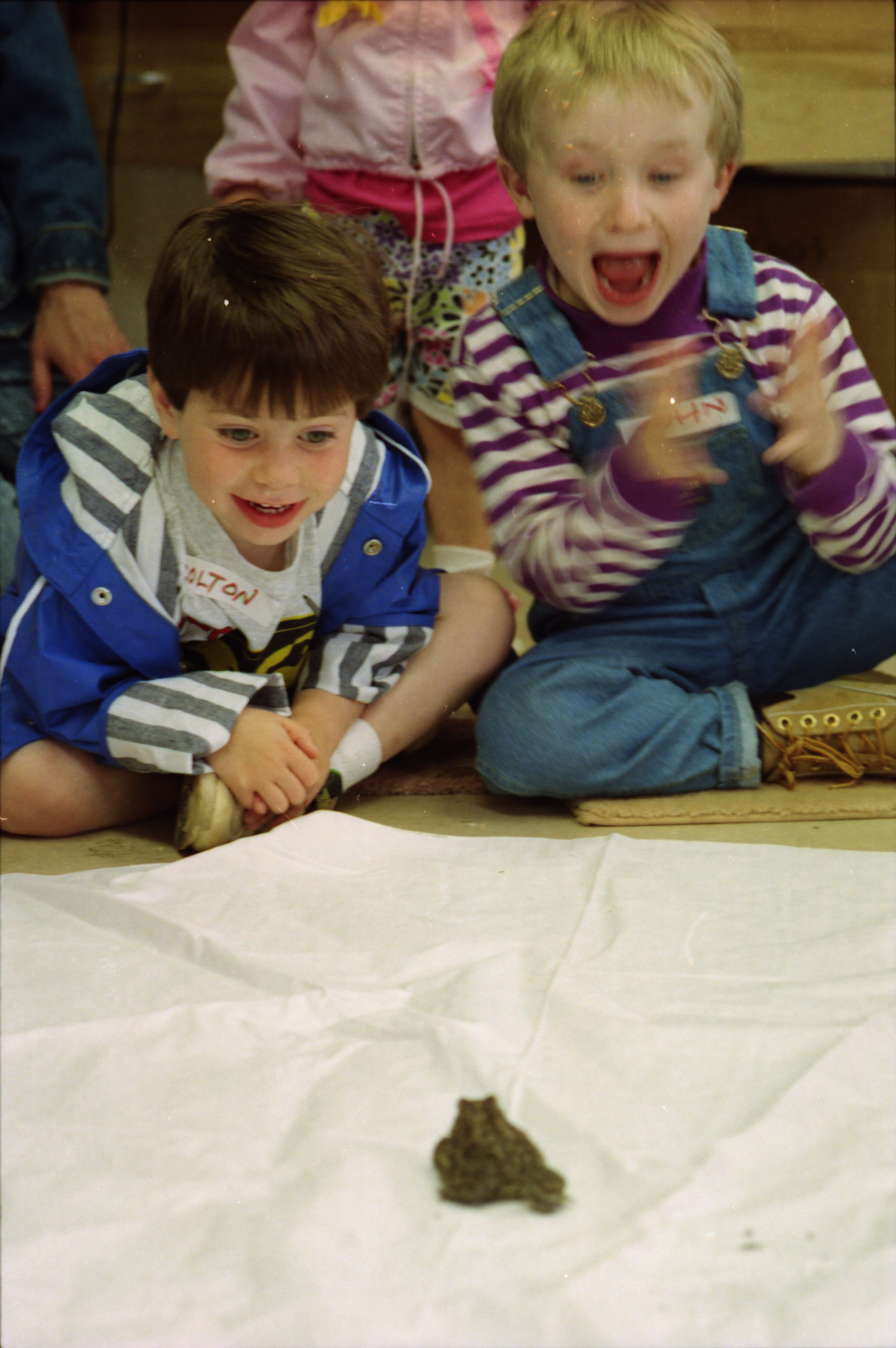 Colton Morozow and John Hatch watching a toad eat a mealworm, Leslie Science Center, May, 1994 image