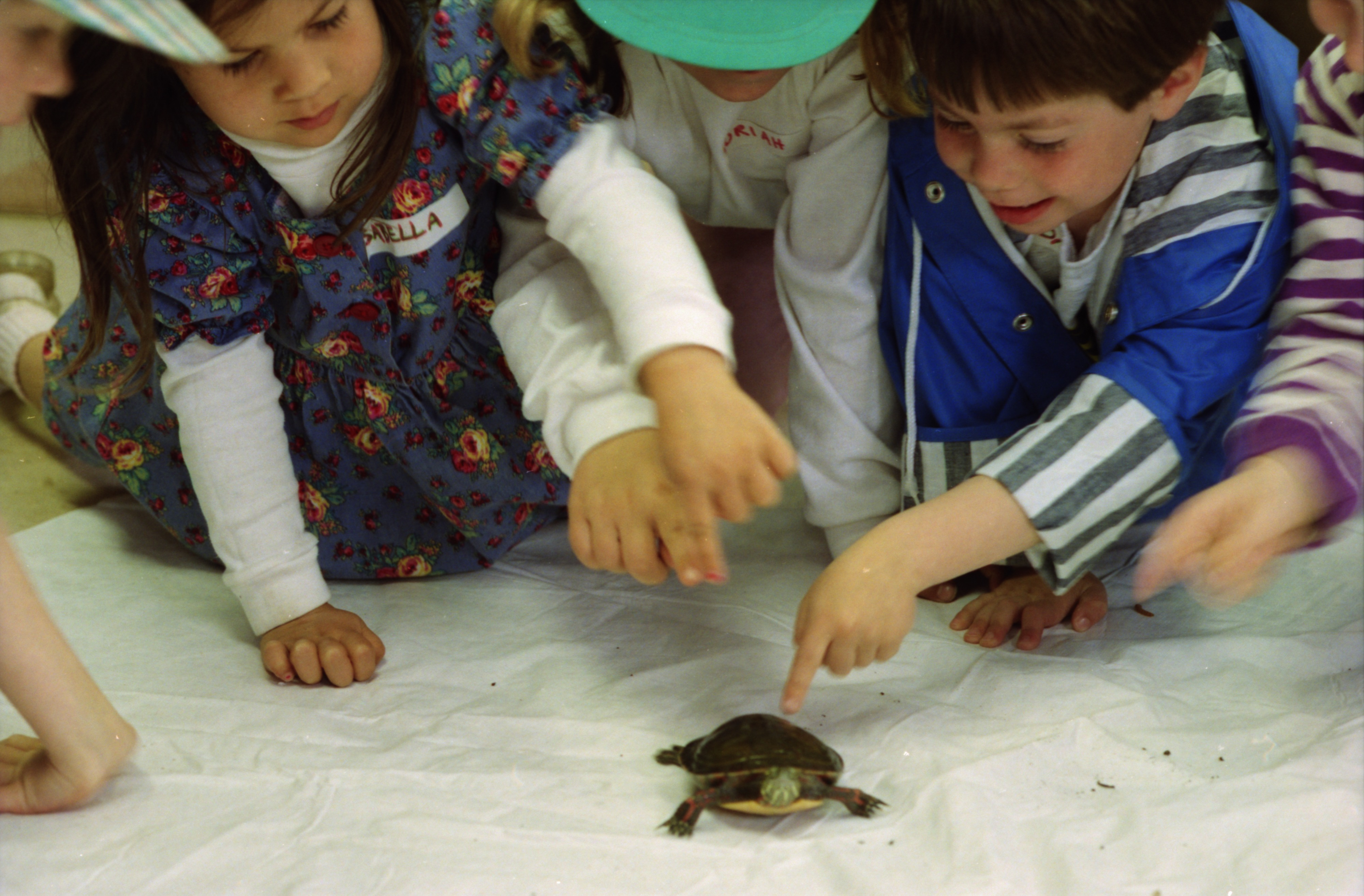 Kids with Turtle, Leslie Science Center, May, 1994 image