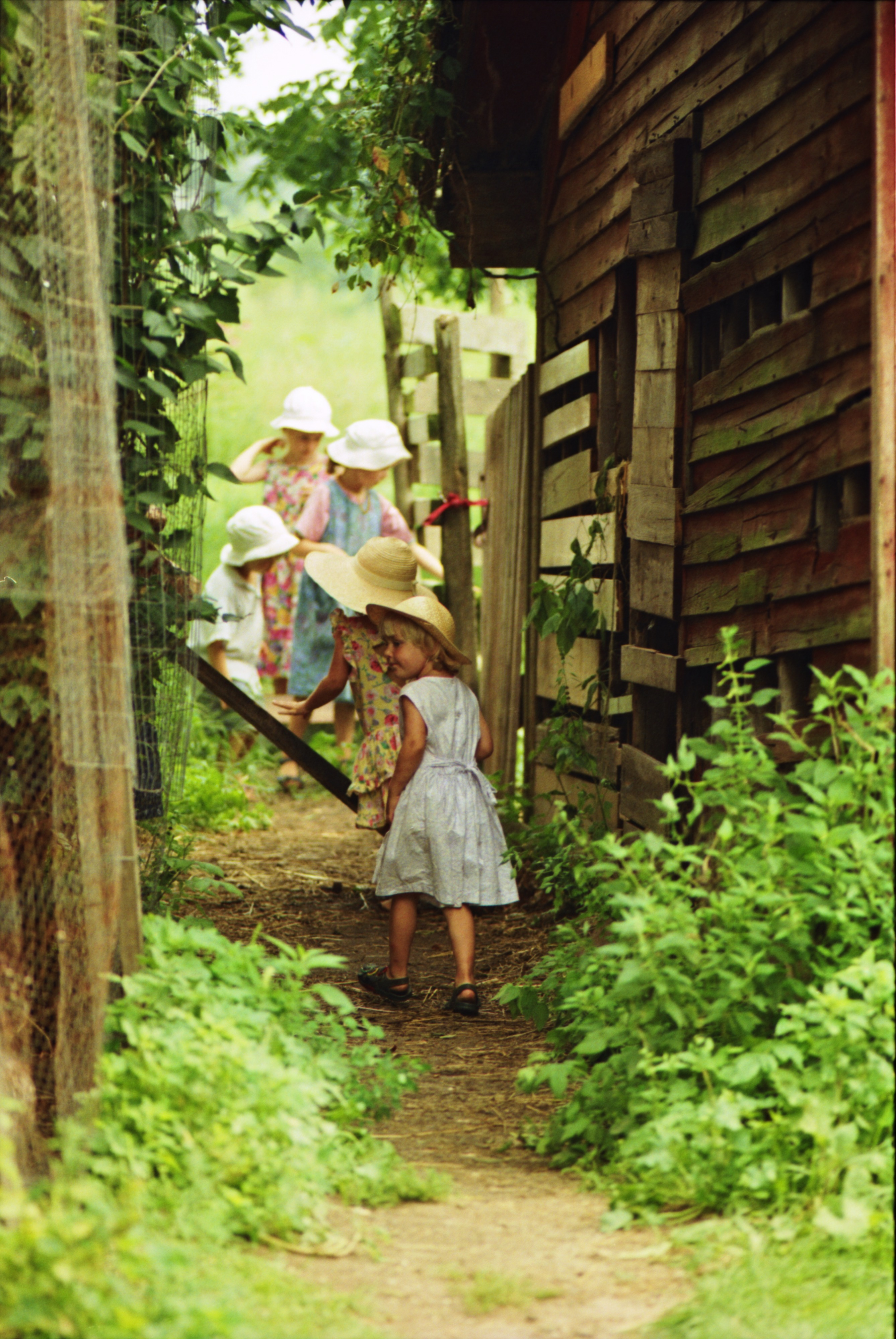 A Visit to the Community Farm of Ann Arbor, August 1995 image
