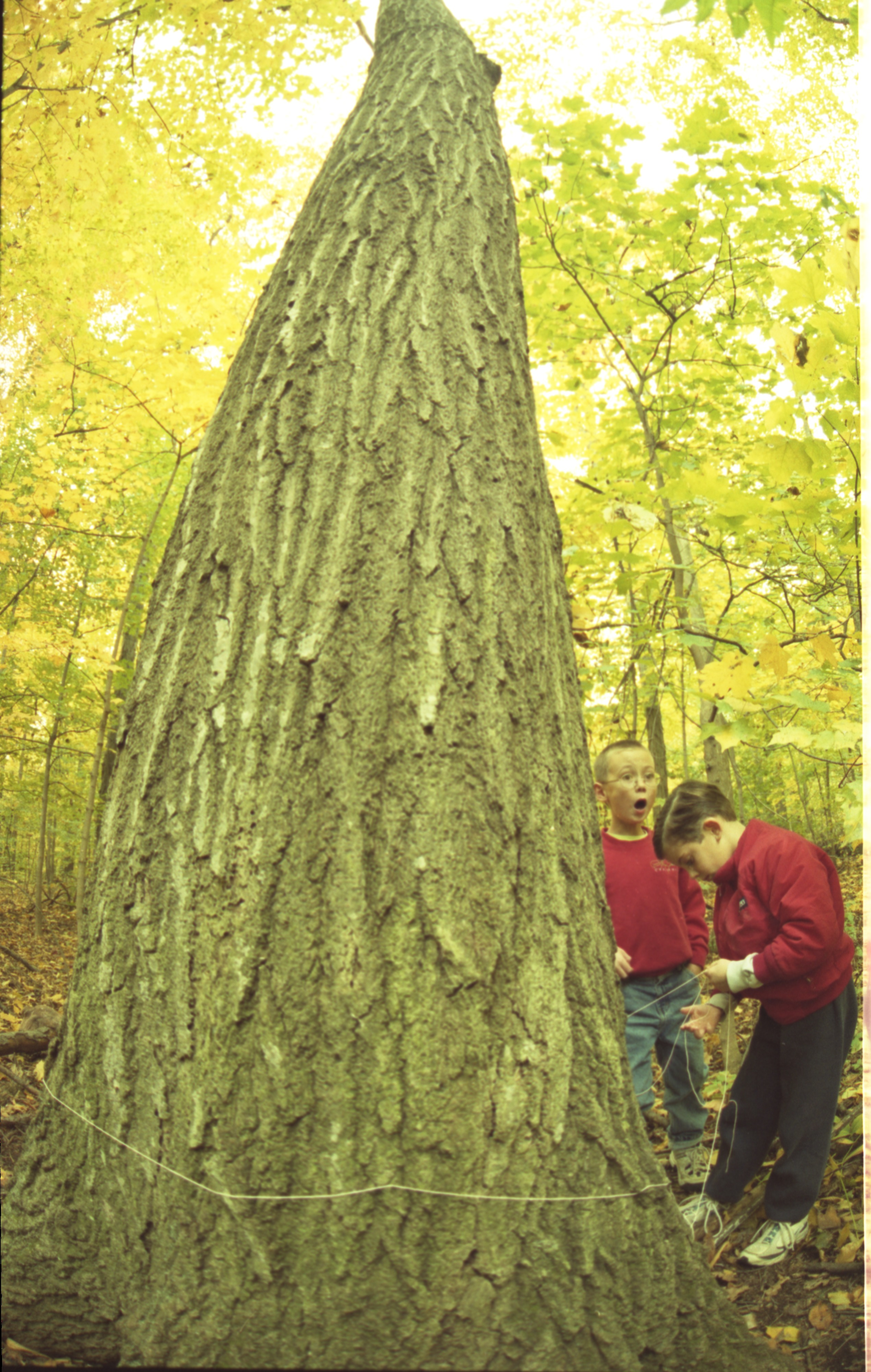 Eberwhite School Forestry Club Tags Trees Killed By Gypsy Moths In Eberwhite Woods, October 1999 image