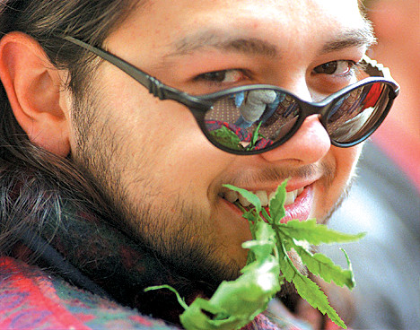 Hash Bash Participant, Steve Spencer, Chews On Fake Marijuana Plant, April 5, 1998 image