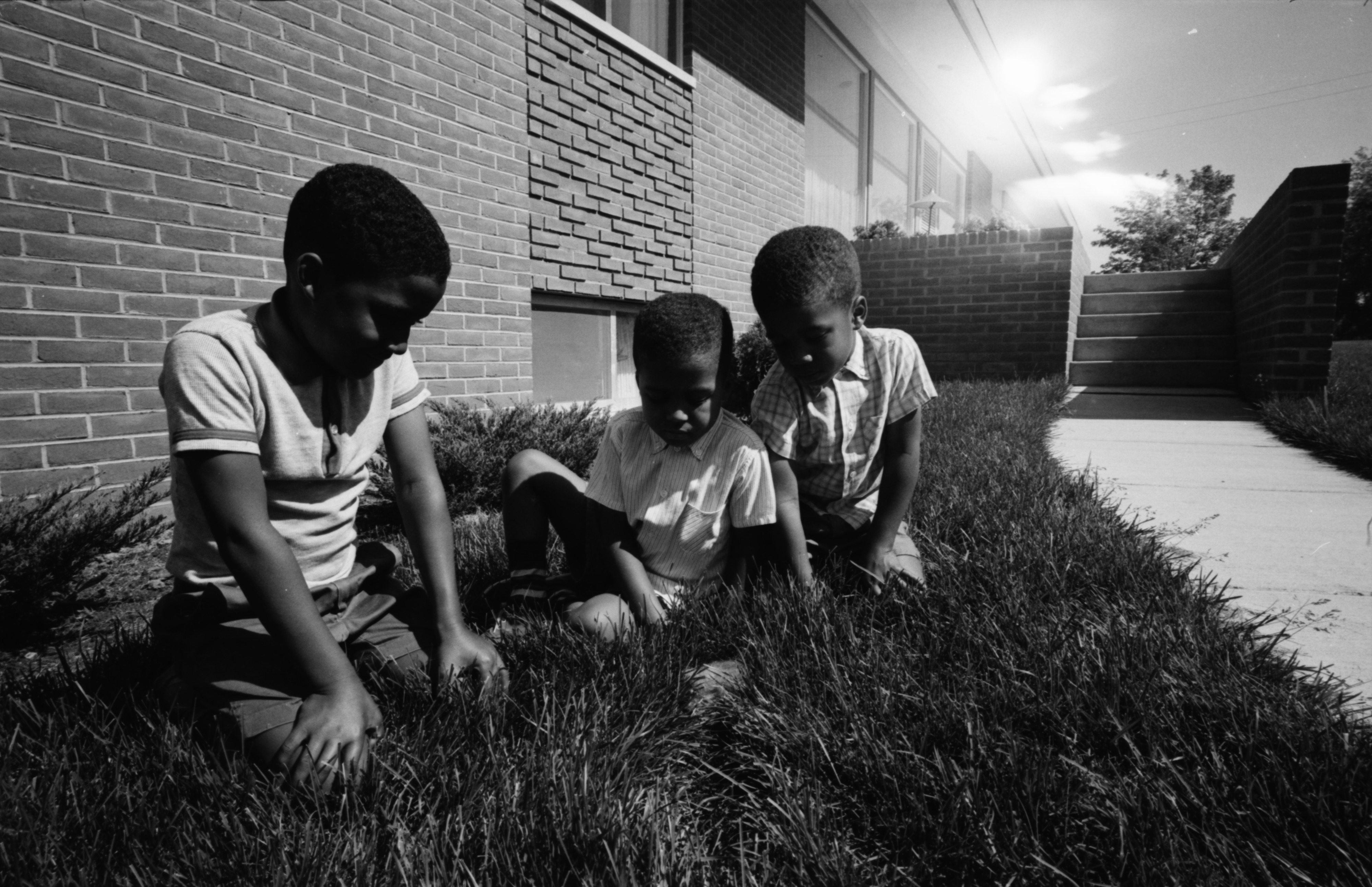 Three Boys with Rabbit's Nest, June 1965 image